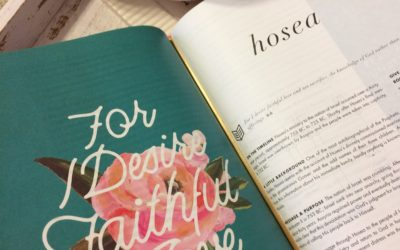 Win a FREE She Reads Truth Bible